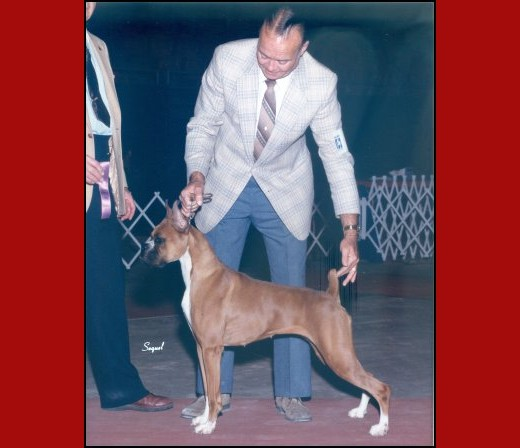 WB -- Louisiana Kennel Club - 1985